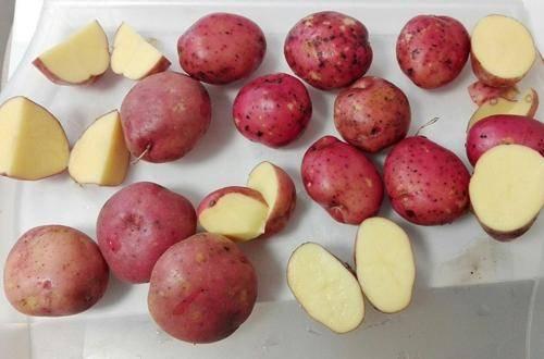 Сорт картофеля «розана»: характеристика, описание, урожайность, отзывы и фото