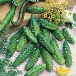 Огурец раннеспелый – пальчик. внешний вид зеленца, правила высадки, плюсы, минусы