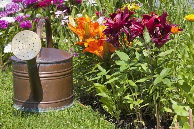 Зачем вносить удобрения осенью, и можно ли обойтись без них