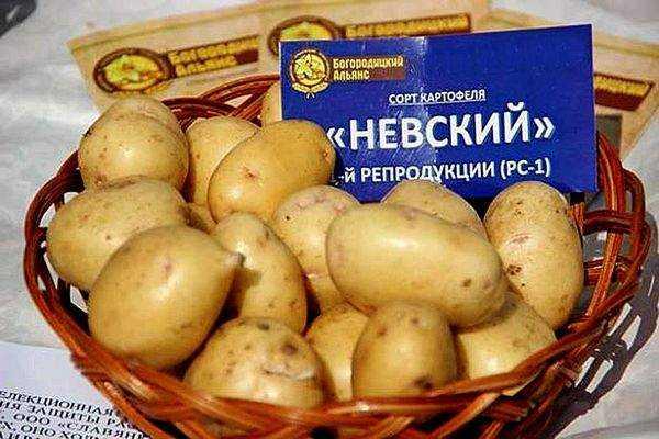 Картофель айл оф джура