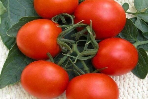 Помидоры «верлиока»: описание, агротехника выращивания