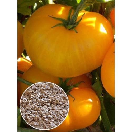 Томат апельсин: описание сорта и 3 правила выращивания