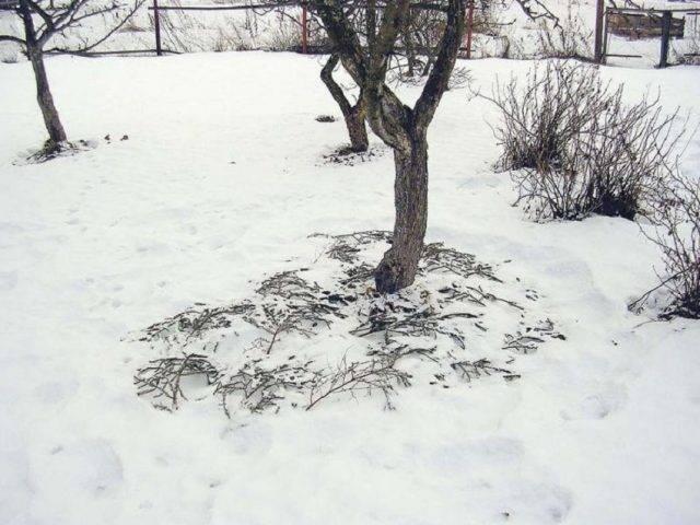 Почему я не копаю свой огород, или как мне удалось отказаться от лопаты