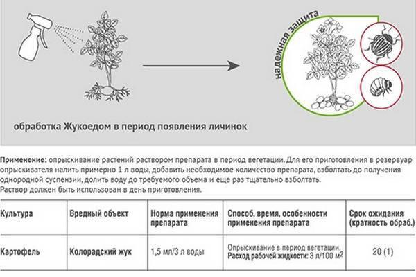 Как разводить жукоед для опрыскивания картофеля от колорадского жука