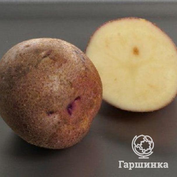 Сорт картофеля «журавушка»: характеристика, описание, урожайность, отзывы и фото