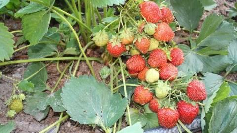 Виды удобрений, их классификация, основное назначение