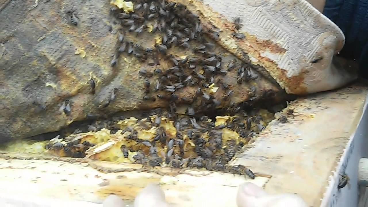 Колода для пчел или улей-дупло
