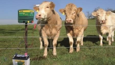 Как научиться правильно доить корову руками – советы опытных доярок