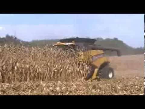 Технологии и техника уборки и хранения зерна кукурузы