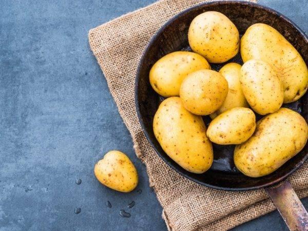 Картофель сорта зекура: описание, особенности ухода, отзывы