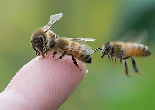 Дымарь для пчел своими руками