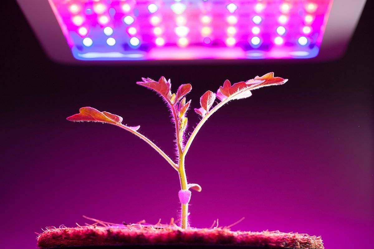 Лампы для растений (рассады) - огород