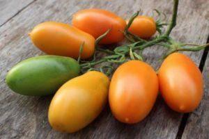 Новый, но уже успевший полюбиться фермерам сорт — томат «сахарная настасья»