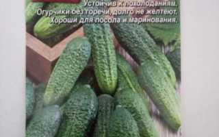Особенности выращивания сорта огурцов «хрустик f1»