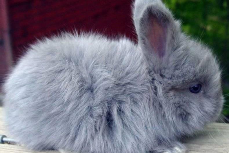 Домашний кролик — породы, виды, особенности, уход и содержание в домашних условиях (135 фото)