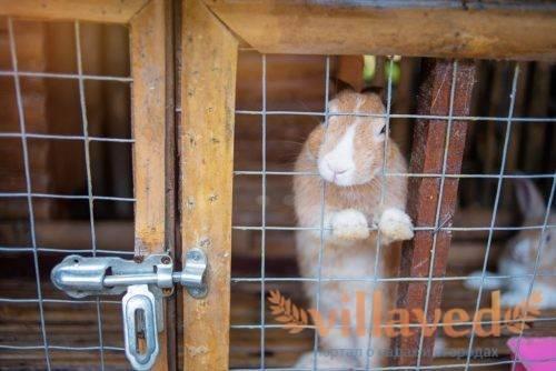 Клетки для кроликов своими руками, все размеры и чертежи: инструкция