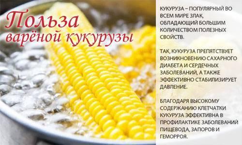 Варёная кукуруза: калорийность, польза и вред для здоровья организма