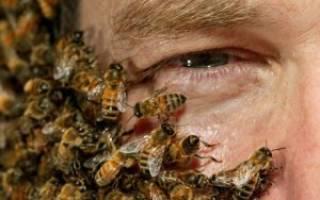 Как проводится лечение пчелами: принципы, польза и вред