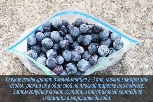 Полезные свойства голубики: состав, характеристики, показания и противопоказания к применению в пищу (130 фото)
