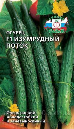 Описание сорта огурцов изумрудный поток — особенности выращивания