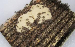 Подкормка пчел в августе