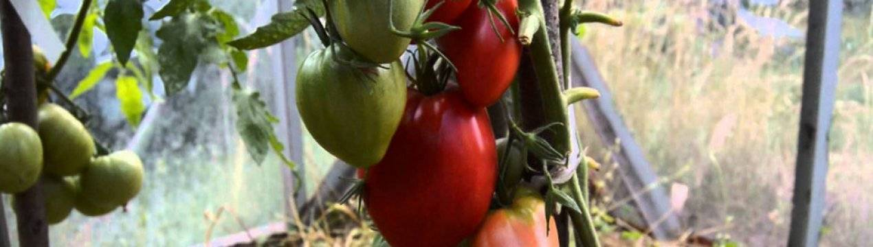 Чудо в красном — описание характеристик сорта томата «мазарини»