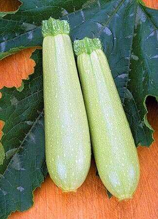 Выращивание урожайных кабачков кавили f1