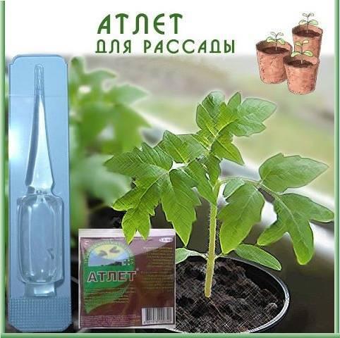 Мечта огородника: чем подкормить рассаду, чтобы была толстенькая :)