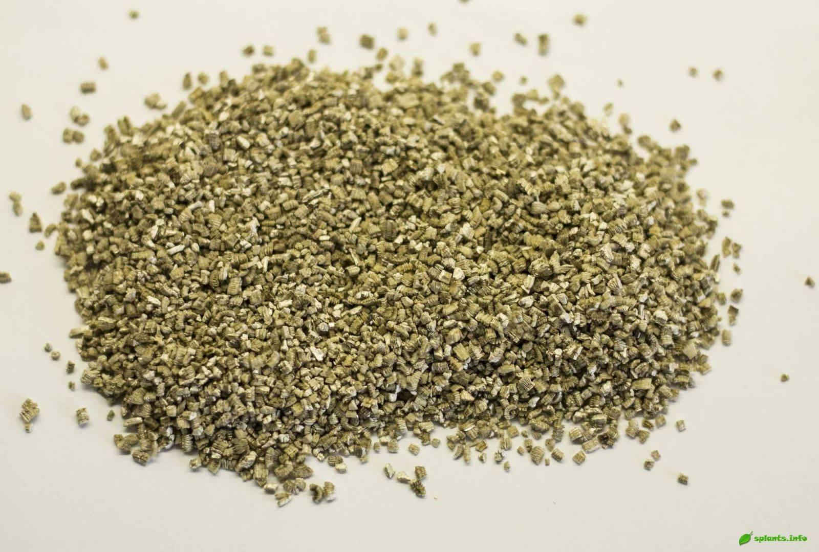 Перлит или вермикулит: что лучше для растений