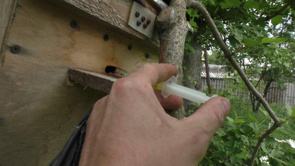 Как поймать рой пчел
