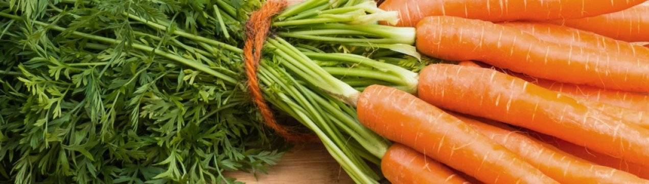 Можно ли размещать морковь и лук на одной грядке? сроки и схема посадки растений