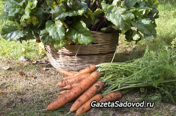 Что это такое — микроудобрение в сельском хозяйстве?