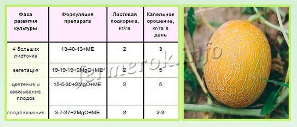 Подкормка арбузов в открытом грунте: виды удобрений, полезные рекомендации