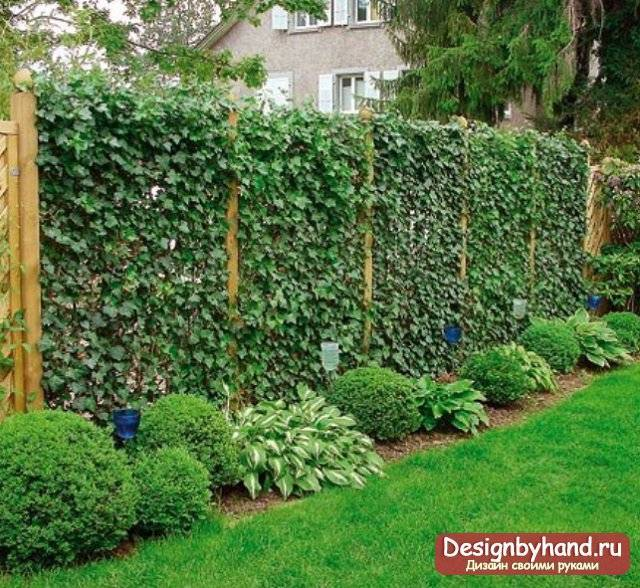 Вертикальный сад: 100 идей создания зеленой стены