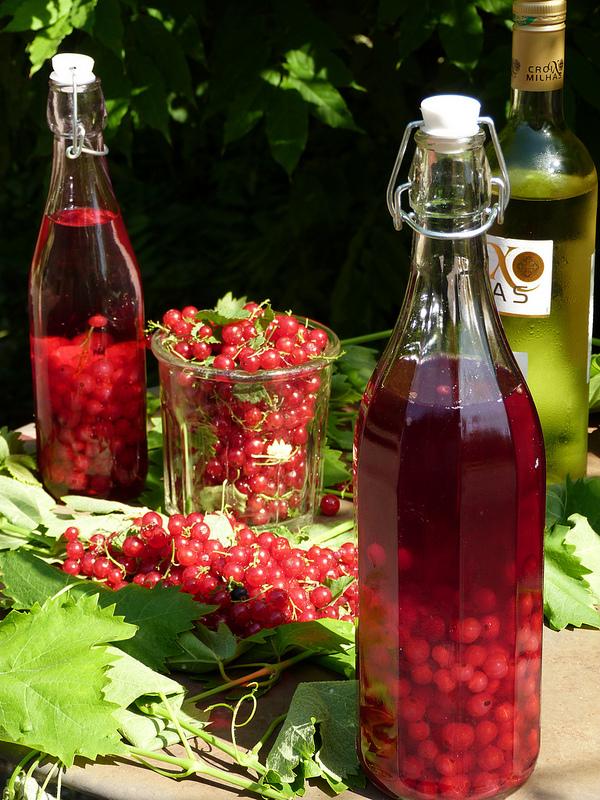 Рецепты настойки на листьях смородины и ветках