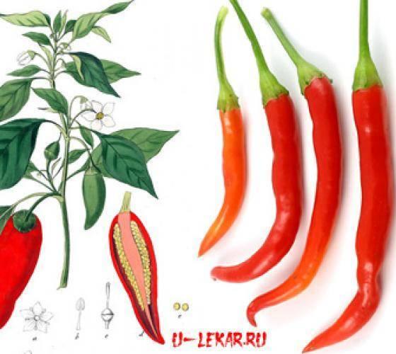 Выращивание горького перца в домашних условиях: особенности ухода