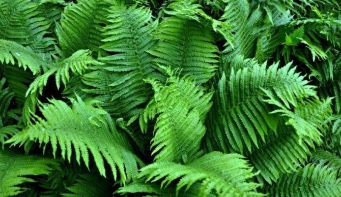Дикорастущие съедобные и лекарственные растения