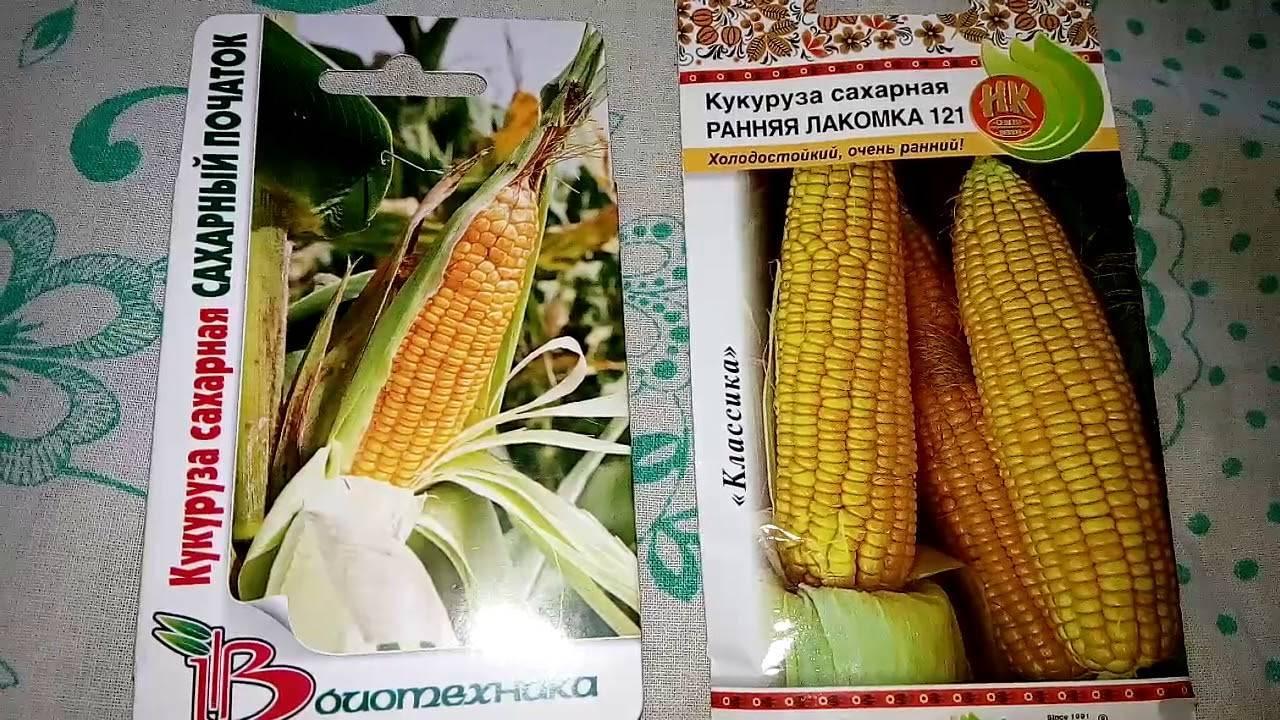 Кукуруза американка — описание сорта, фото и отзывы