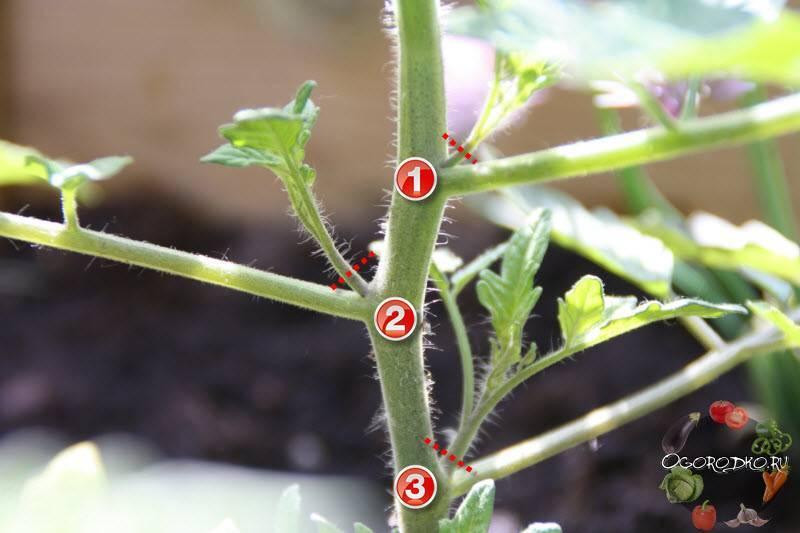Правильно пасынкование помидоров в теплице пошагово: схема, описание, фото, видео и формирование куста