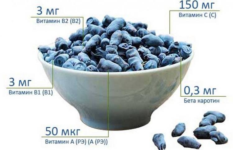 Жимолость: полезные свойства ягоды для организма человека, применение и противопоказания