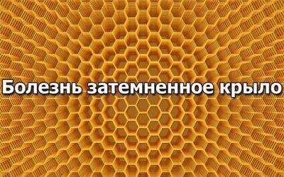 Лечение пчел от аскосфероза