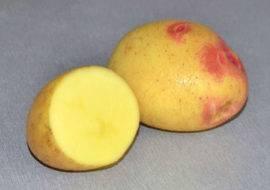 Картофель Барон