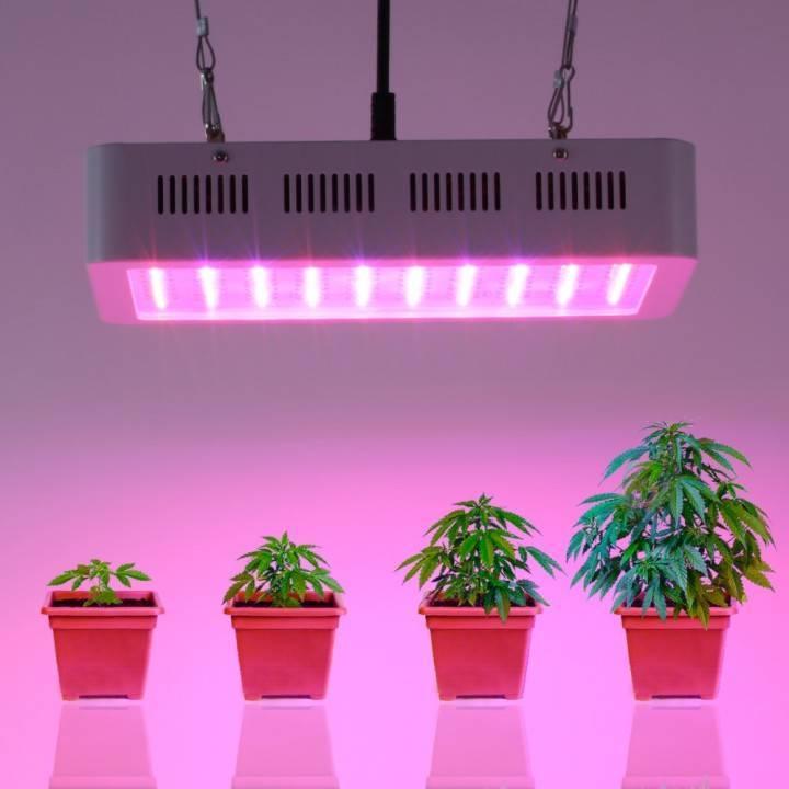 Какие лампы нужны для подсветки рассады? не покупайте лишнего! какие лампы для рассады купить