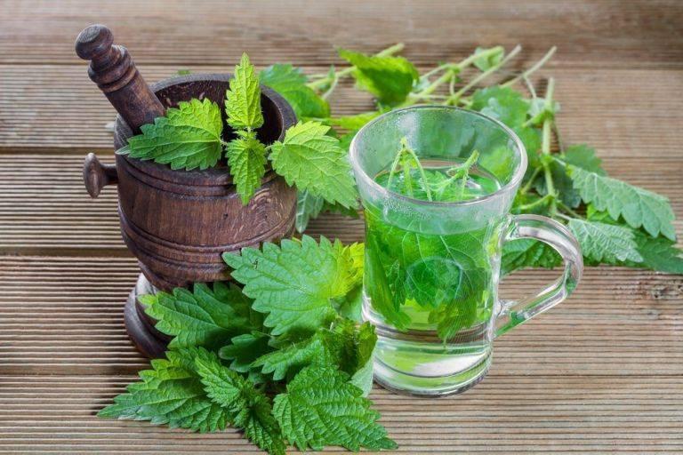 Польза марокканской мяты, приготовление чая из нее