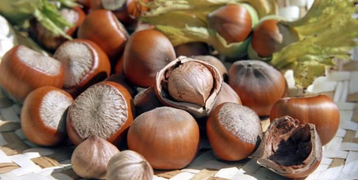 Орехи фундук: польза и вред для организма