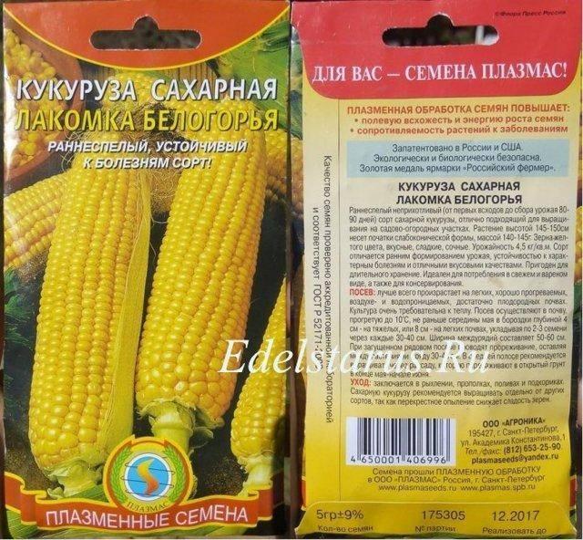 Технология выращивания сладкой сахарной кукурузы