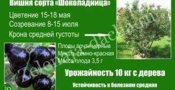 Вишня щедрая отзывы дачников. вишня щедрая — описание сорта, фото, отзывы садоводов