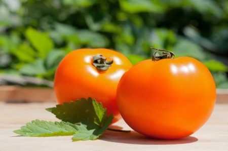 Один из самых полезных и вкусных томатов — оранжевый слон: описание сорта и его достоинства
