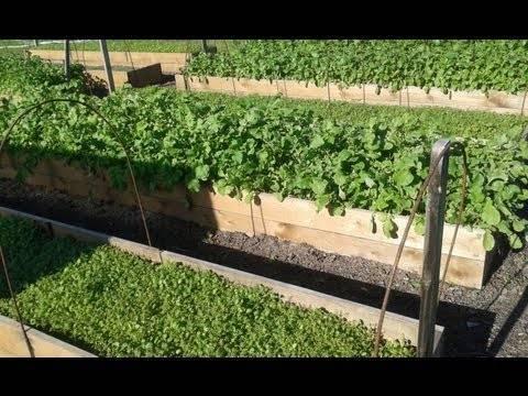 Чем засеять огород, чтобы на нём не росли сорняки