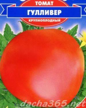 Характеристика, описание и особенности выращивания томата сорта гулливер